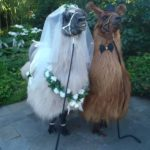 Llama alpaca wedding bride groom pet ceremony Logan, Beenleigh, brisbane, Gold Coast, Tamborine mountain, Windaroo, Waterford, Queensland
