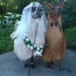 Llama alpaca wedding bride groom pet ceremony Logan, Beenleigh, brisbane, Gold Coast, Tamborine mountain, Windaroo, Waterford, Queensland