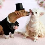 dog pet friendly wedding assistant marriage ceremony cherish ceremonies logan brisbane beenleigh windaroo waterford queensland